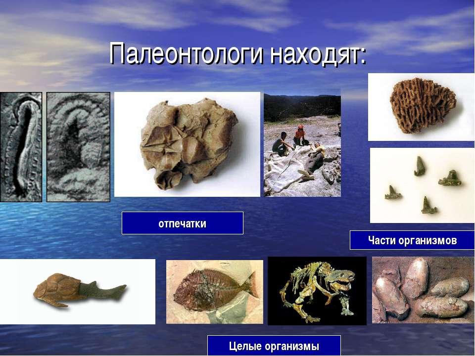 Палеонтологи находят: отпечатки Части организмов Целые организмы