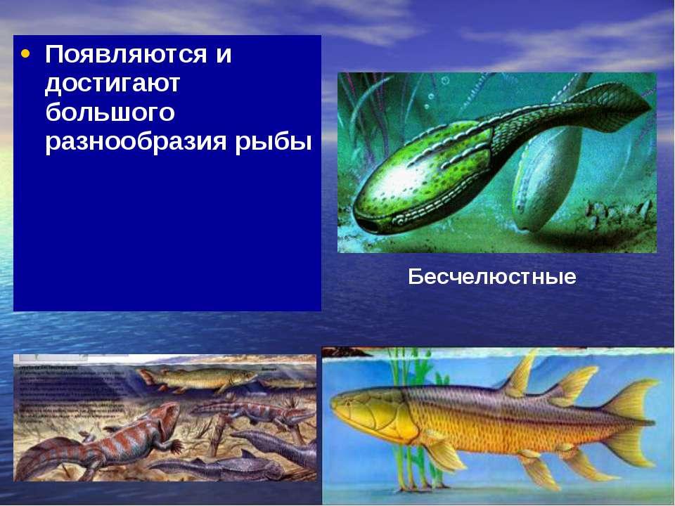 Появляются и достигают большого разнообразия рыбы Бесчелюстные