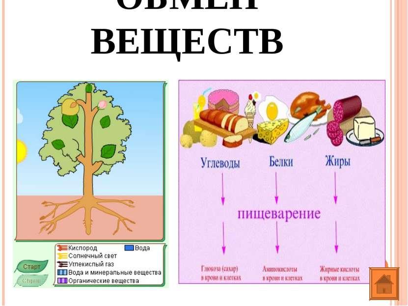 ОБМЕН ВЕЩЕСТВ