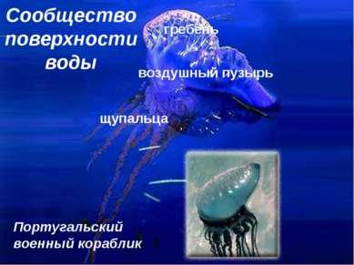 Сообщество поверхности воды гребень воздушный пузырь щупальца Португальский в...