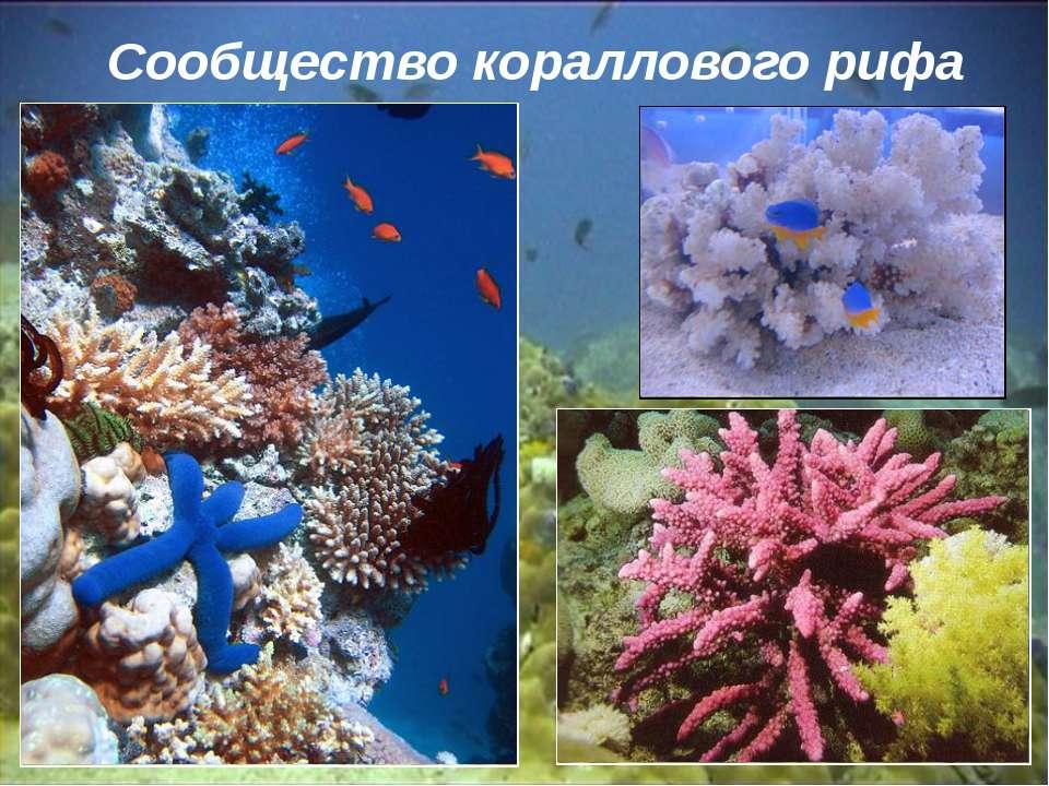 Сообщество кораллового рифа