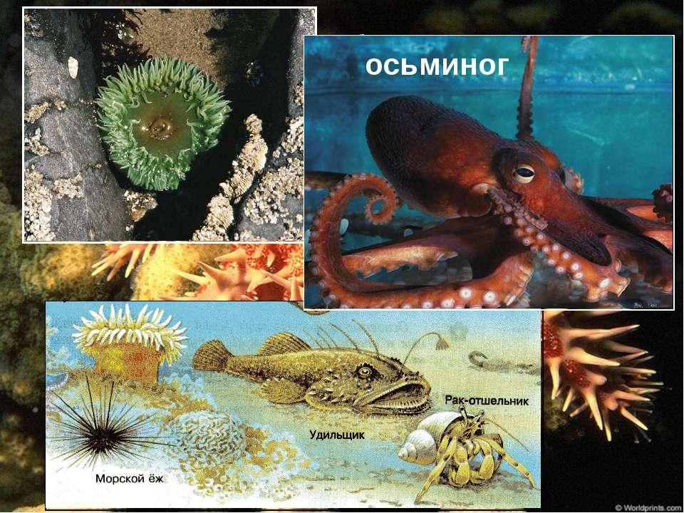 Донное сообщество осьминог