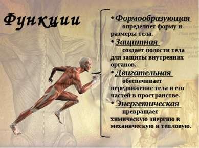 Формообразующая определяет форму и размеры тела. Защитная создаёт полости тел...