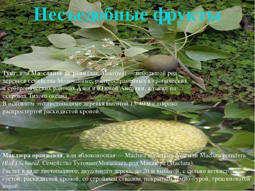 свити Свити(Citrus Sweetie)— также известен как Оробланко (Oroblanco) и Пом...