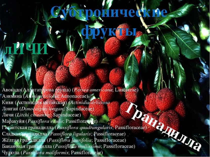 Тропические фрукты Платония(Platonia insignis;Clusiaceae) Lemon Drop Mangos...