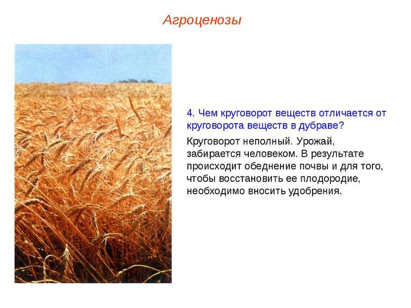 Агроценозы 4. Чем круговорот веществ отличается от круговорота веществ в дубр...