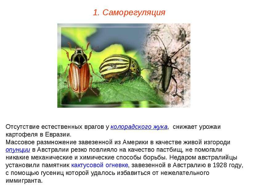 1. Саморегуляция Отсутствие естественных врагов у колорадского жука, снижает ...