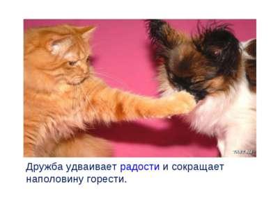 Дружба удваивает радости и сокращает наполовину горести.
