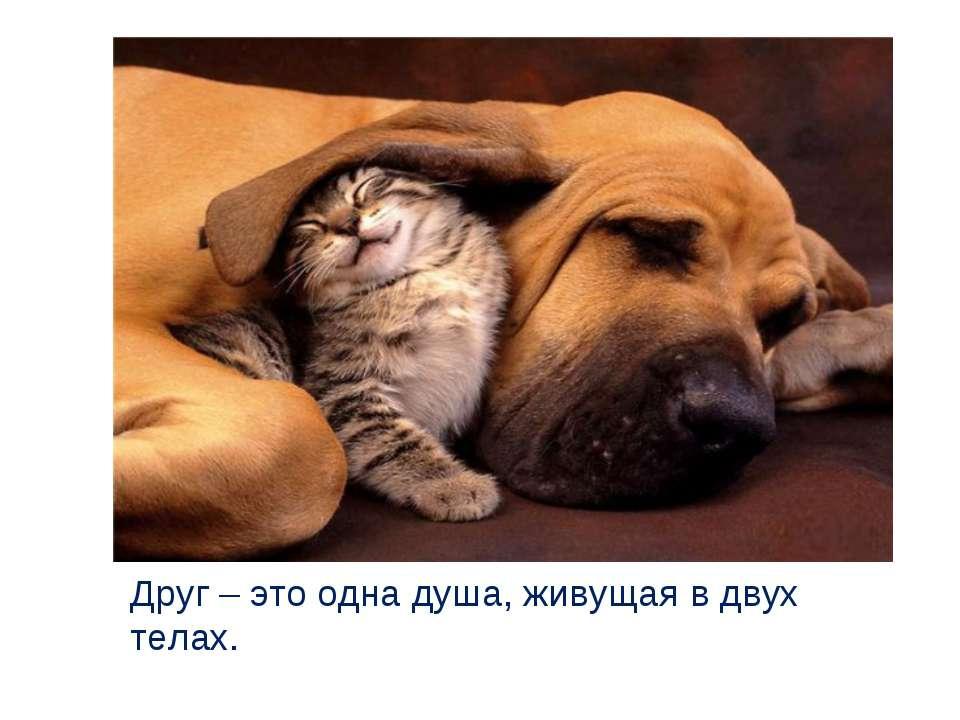 Друг – это одна душа, живущая в двух телах.