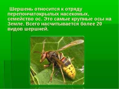 Шершень относится к отряду перепончатокрылых насекомых, семейство ос. Это сам...