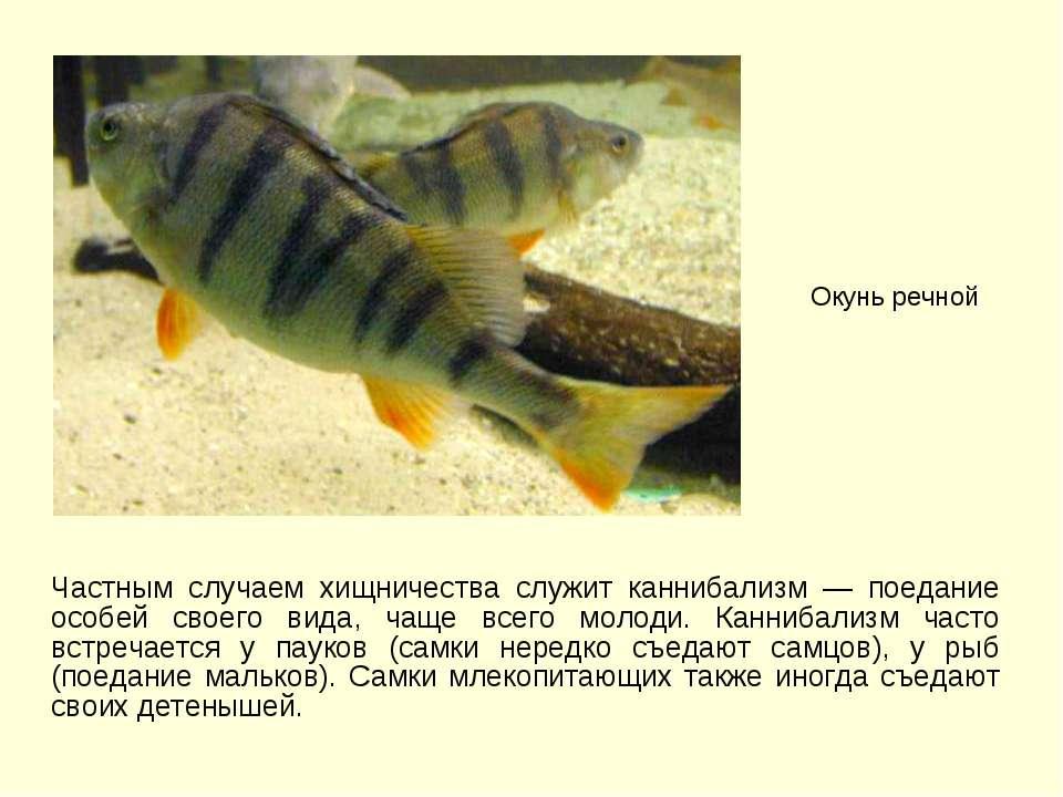 Частным случаем хищничества служит каннибализм — поедание особей своего вида,...