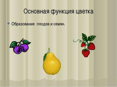 Основная функция цветка Образование плодов и семян.