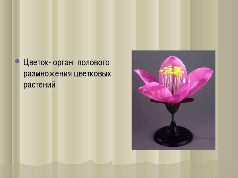 Цветок- орган полового размножения цветковыx растений