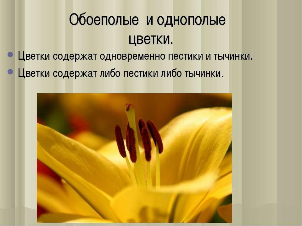 Обоеполые и однополые цветки. Цветки содержат одновременно пестики и тычинки....