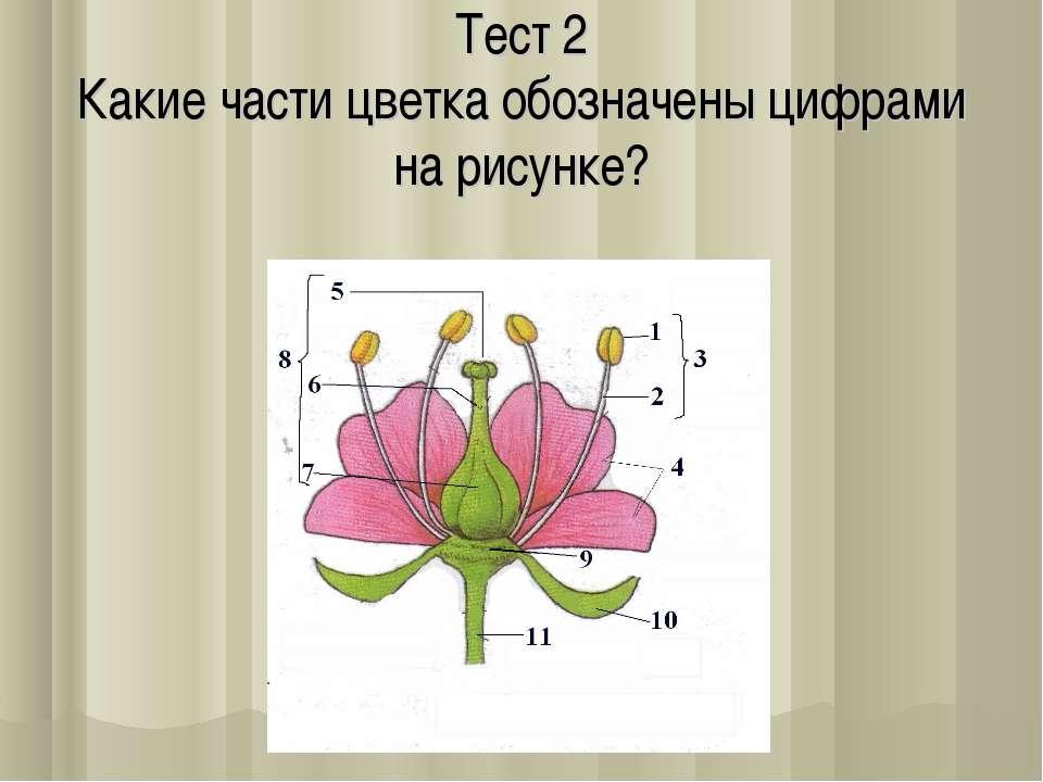 Тeст 2 Какиe части цветка обозначены цифрами на рисунке?