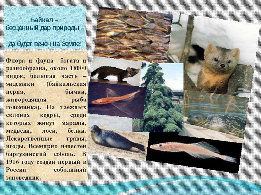 Байкал – бесценный дар природы – да будет вечен на Земле! Флора и фауна богат...