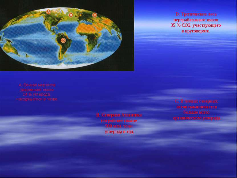А. Вечная мерзлота удерживает около 14 % углерода, находящегося в почве. B. С...