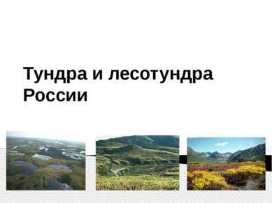 Тундра и лесотундра России