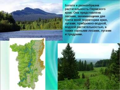 Богата и разнообразна растительность Пермского края. Она представлена лесами,...