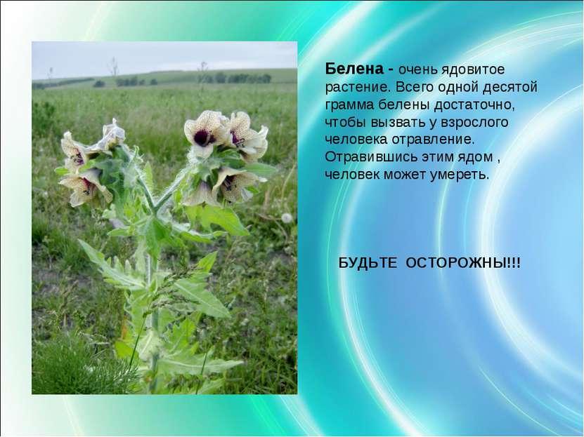 Белена - очень ядовитое растение. Всего одной десятой грамма белены достаточн...