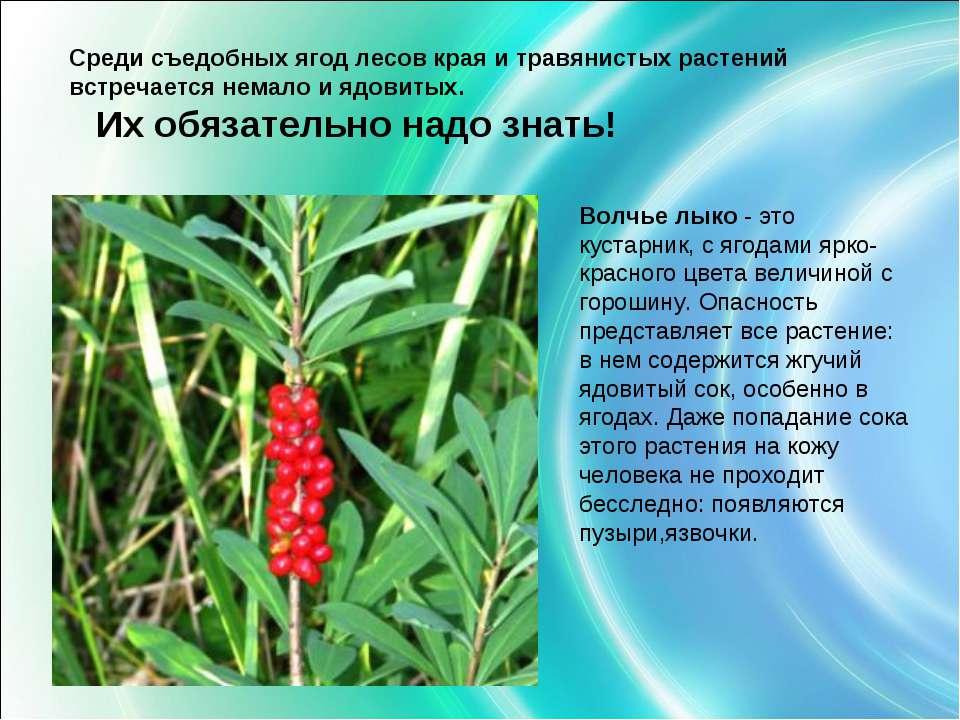 Среди съедобных ягод лесов края и травянистых растений встречается немало и я...