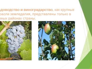 Садоводство и виноградарство, как крупные отрасли земледелия, представлены то...