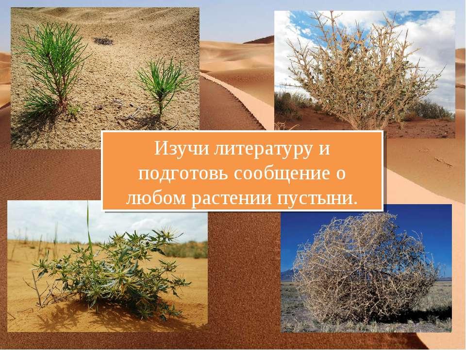 Изучи литературу и подготовь сообщение о любом растении пустыни.