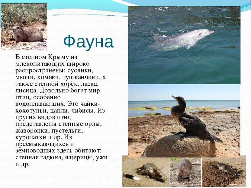 Фауна В степном Крыму из млекопитающих широко распространены: суслики, мыши, ...
