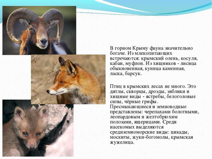 Фауна В горном Крыму фауна значительно богаче. Из млекопитающих встречаются: ...