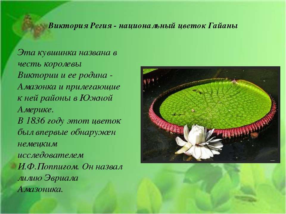 Виктория Регия - национальный цветок Гайаны Эта кувшинка названа в честь коро...