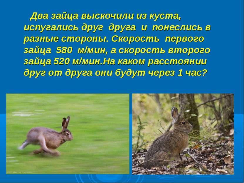 Два зайца выскочили из куста, испугались друг друга и понеслись в разные стор...