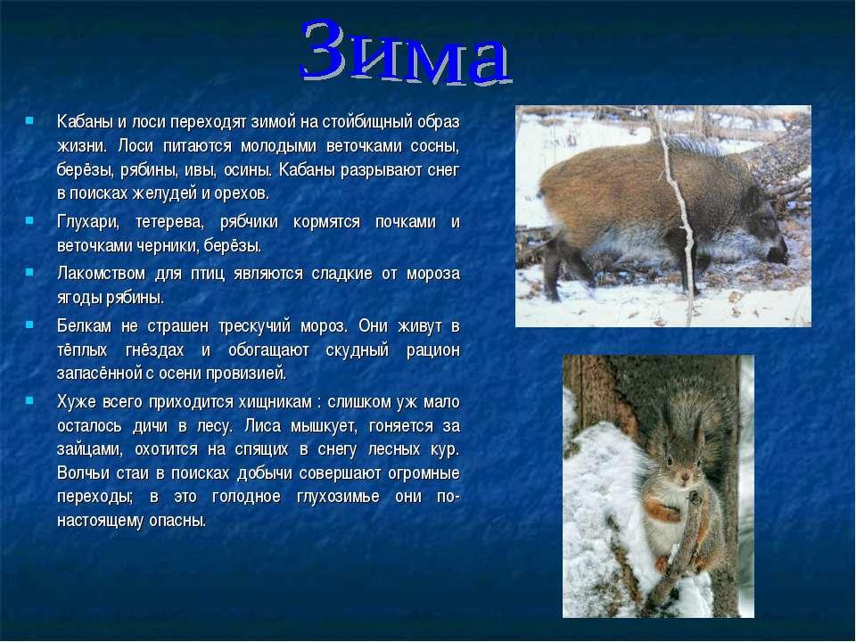 Кабаны и лоси переходят зимой на стойбищный образ жизни. Лоси питаются молоды...