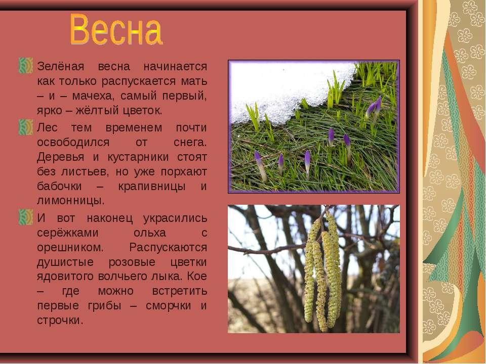 Зелёная весна начинается как только распускается мать – и – мачеха, самый пер...