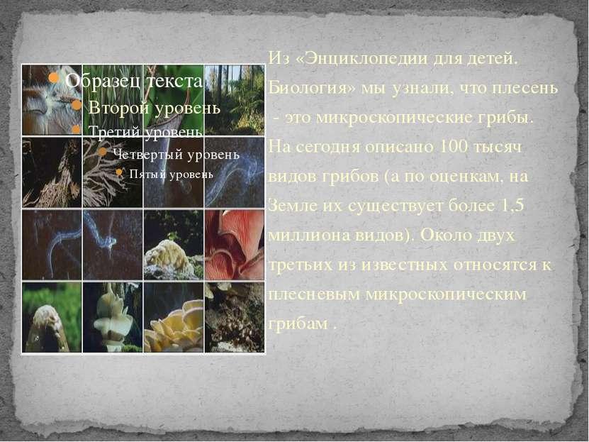 Из «Энциклопедии для детей. Биология» мы узнали, что плесень - это микроскопи...