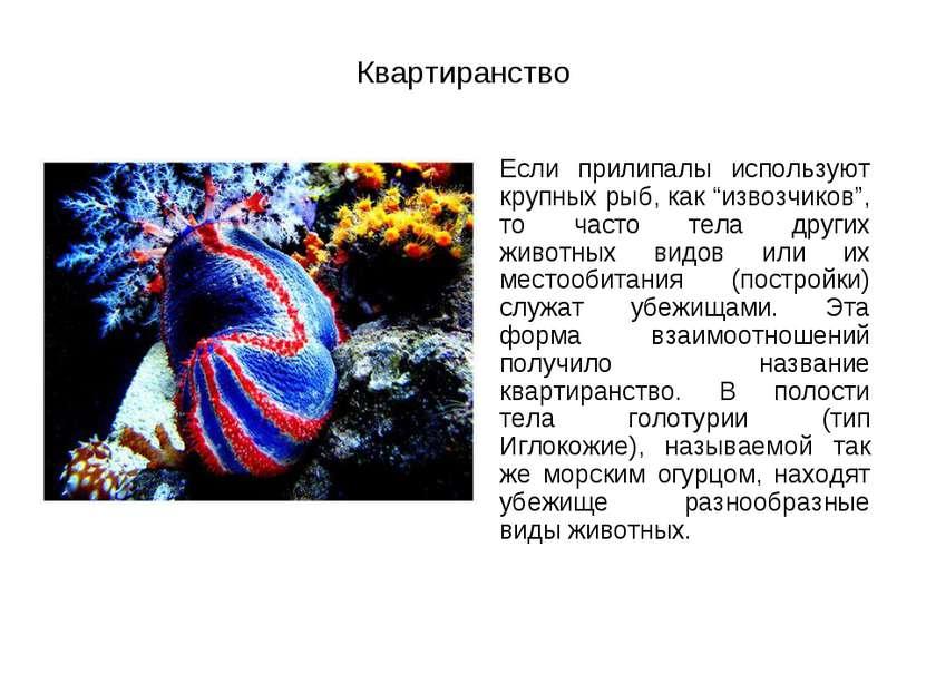 """Квартиранство Если прилипалы используют крупных рыб, как """"извозчиков"""", то час..."""