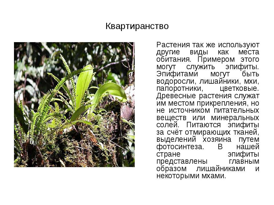 Квартиранство Растения так же используют другие виды как места обитания. Прим...