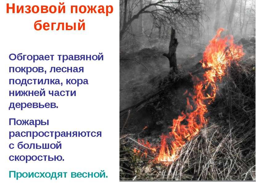 Низовой пожар беглый Обгорает травяной покров, лесная подстилка, кора нижней ...