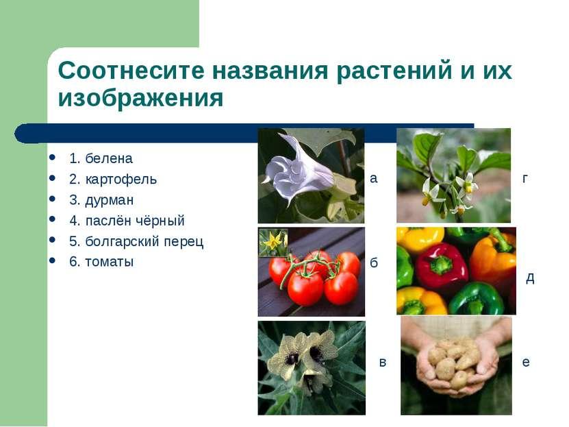 Соотнесите названия растений и их изображения 1. белена 2. картофель 3. дурма...