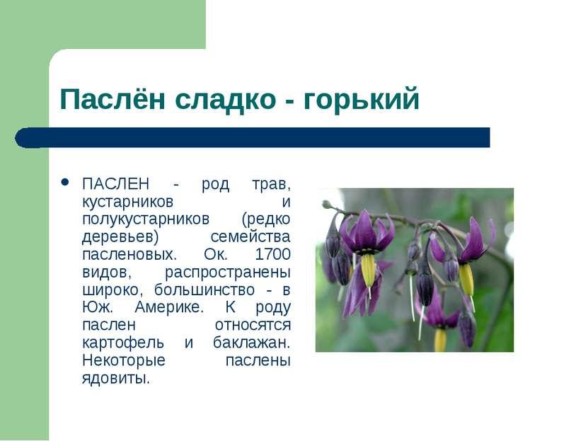 Паслён сладко - горький ПАСЛЕН - род трав, кустарников и полукустарников (ред...