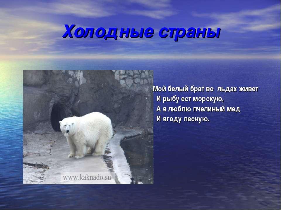 Холодные страны Мой белый брат во льдах живет И рыбу ест морскую, А я люблю п...