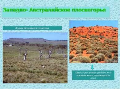 Скудная растительность плоскогорья. Красный цвет пустыня приобрела из-за окис...