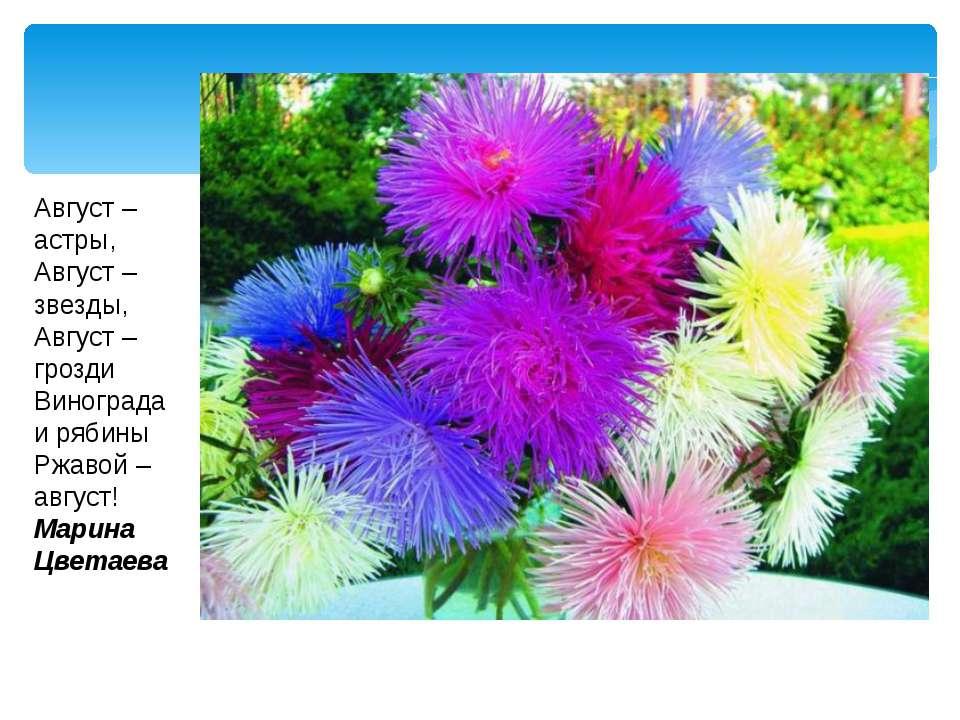 Август – астры, Август – звезды, Август – грозди Винограда и рябины Ржавой – ...