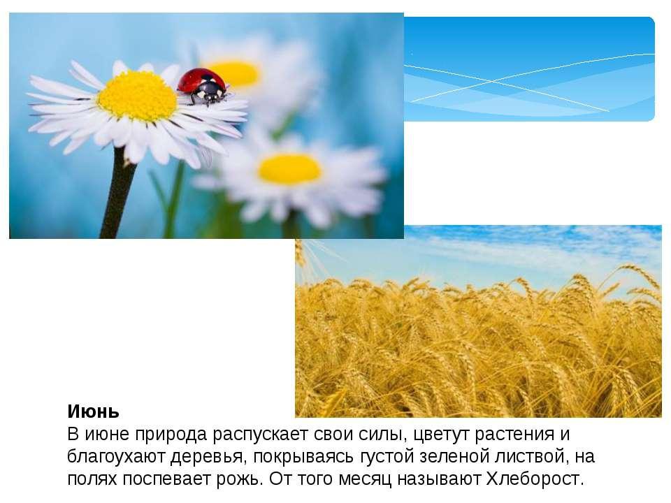 Июнь В июне природа распускает свои силы, цветут растения и благоухают деревь...