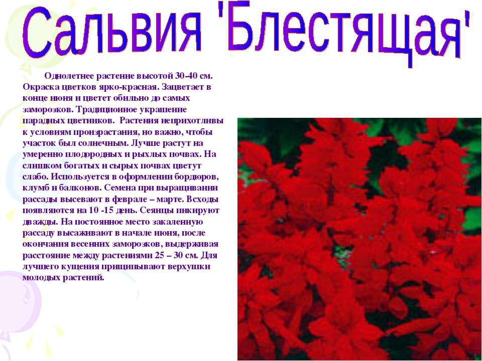 Однолетнее растение высотой 30-40 см. Окраска цветков ярко-красная. Зацветает...