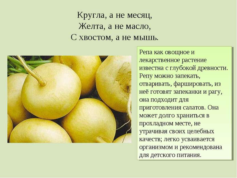 Кругла, а не месяц, Желта, а не масло, С хвостом, а не мышь. Репа как овощное...
