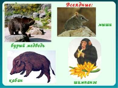 Всеядные: бурый медведь кабан шимпанзе мыши