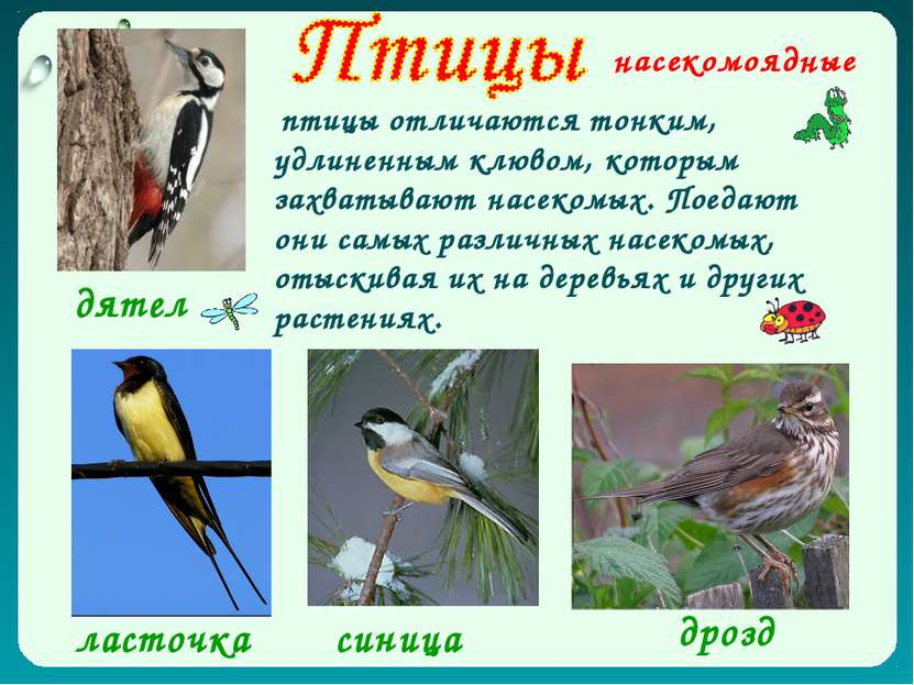 Each beak is its own unique adaptation to help the bird survive in the ecologic niche that it lives in