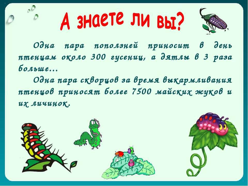 Одна пара поползней приносит в день птенцам около 300 гусениц, а дятлы в 3 ра...