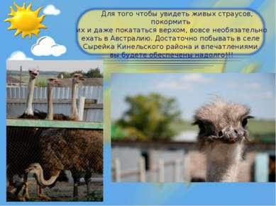 Для того чтобы увидеть живых страусов, покормить их и даже покататься верхом,...