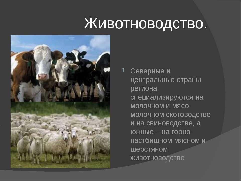 Животноводство. Северные и центральные страны региона специализируются на мол...